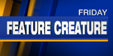 Feature Creature