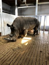 Go Erie Erie Zoo Reopens with New Rhinos